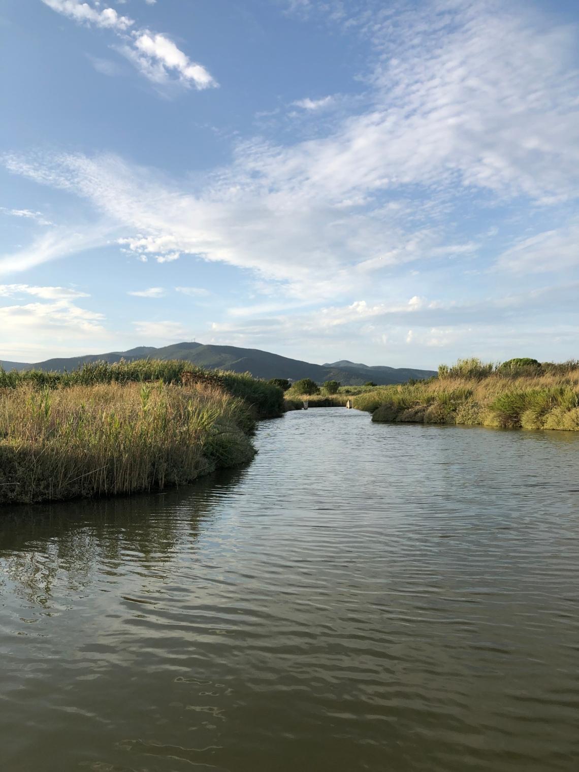 Il Canale Molla nella Riserva Naturale Diaccia Botrona
