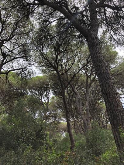 Pineta del Tombolo - Toscana 2019